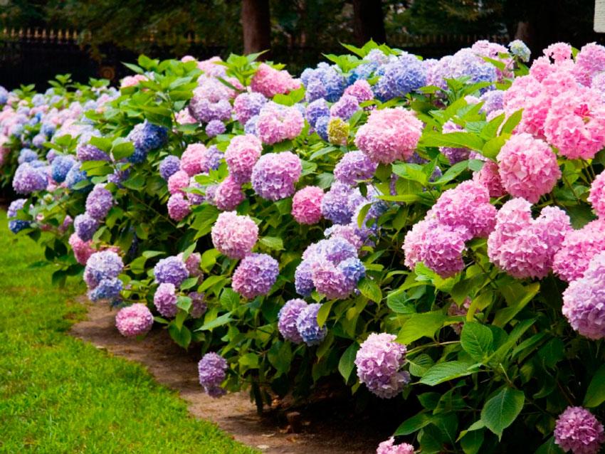Екзотичні квіти під замовлення