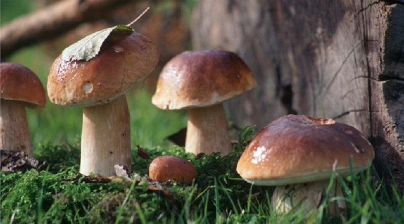10 фактів про гриби, яких ви раніше не знали