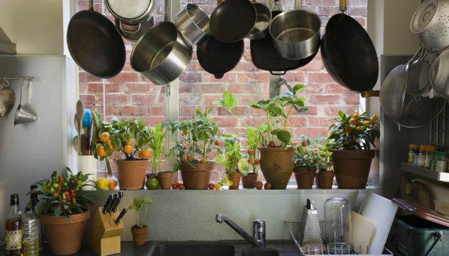 Кімнатні рослини для вашої кухні. Які вибрати, де розмістити, та як доглядати