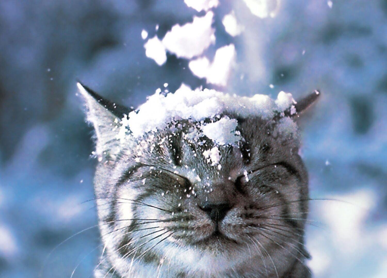 Погода в Луцьку та Волинській області на четвер, 7 лютого