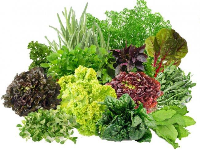 Чим корисний салат, та з якими продуктами його найкраще поєднувати