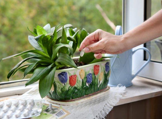 Що портрібно знати про добрива для кімнатних рослин