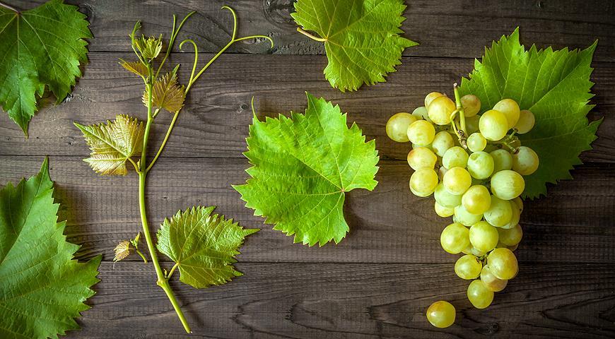 Коли треба розкривати виноград і чому це важливо